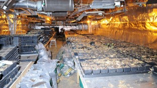 3500 plants found at a property in Wisbech