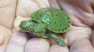 Two-headed turtle in Texas