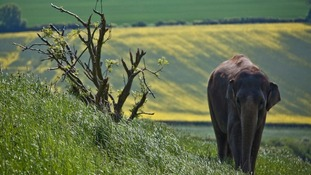 Near Whipsnade, Bedfordshire