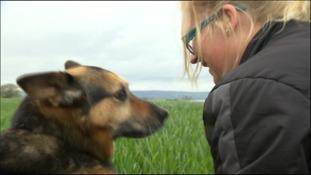 Traing Tyne Best Dog Ever