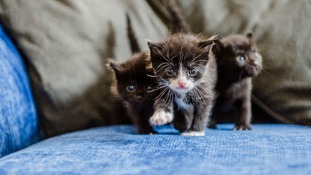 Three piece 'sweet' - trio of kittens found in dumped sofa