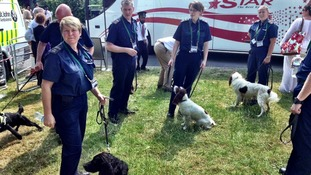 Sniffer dogs taking a break at Wimbledon.