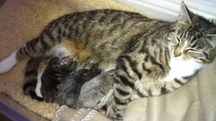 The three newborn kittens pictured with their mother.