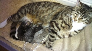 The three newborn kittens have been found hiding in a bedroom at the property.