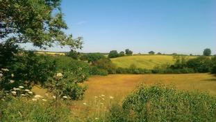 Sunny Watnall, Nottinghamshire.
