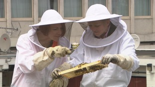 2 women in protective clothing examine bees and honeycomb