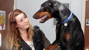 Azar the doberman with his owner Louise Powis