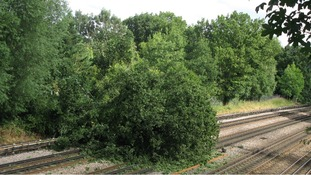 Tree fallen on the Metropolitan Line