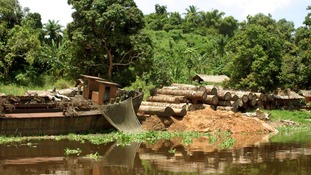Deforestation slowing in African rainforest.