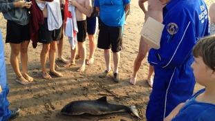 Porpoise in Minehead