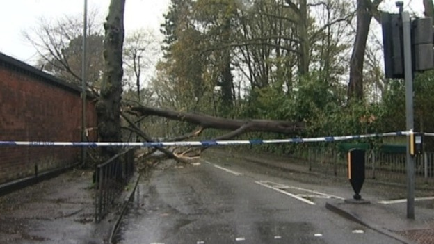 The large tree blocking Queensbridge Road in Birmingham