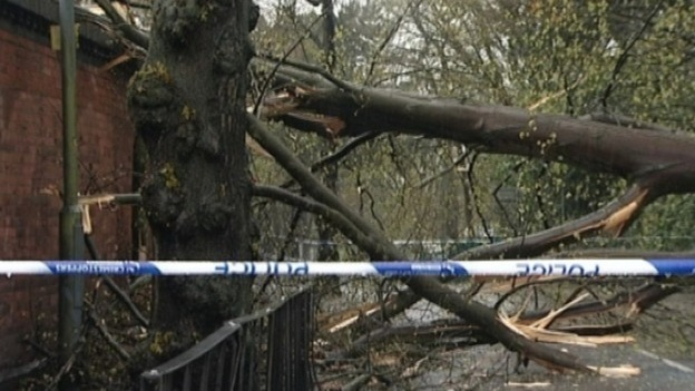 Branches hit a wall near the Swanshurst School