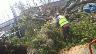 man clears tree