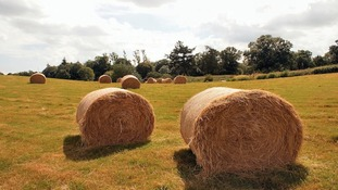 bales of hay in the sun