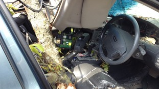 tree through car