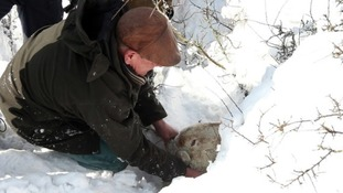 Gareth Wyn Jones rescues sheep in March