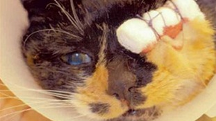 Misty seen after surgery to remove her eye