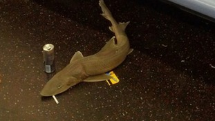 One commuter gave the shark on New York subway a last cigarette and a metro card.