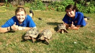 Tortoises with zoo staff