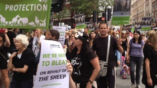 Protestors marching in London against live animal exports