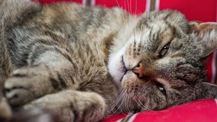 Cat DNA database created in Leicester