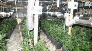 The site of one of the North East's biggest Cannabis farms in Haltwhistle