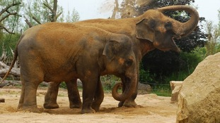 File photo of two elephants at Twycross Zoo.