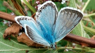Big Butterfly Count - Your pictures