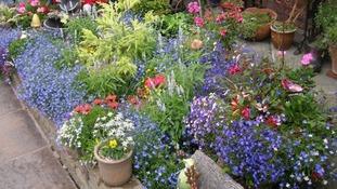 garden in Kimberley