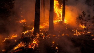 The wildfire in Yosemite National Park and surrounding areas has now burned 149,780 acres - an area larger than the city of Chicago.