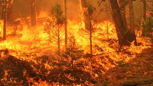 Handout image of the Rim Fire in Yosemite National Park.
