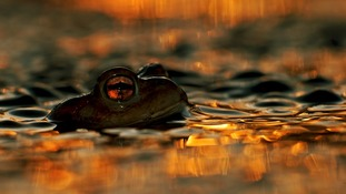 Commended: Animal Portraits. A frog in Warsaw, Poland.