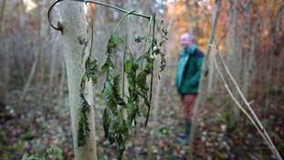 Ash dieback key facts