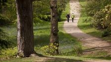 Sparrow Dale, Sheringham Park, Norfolk.