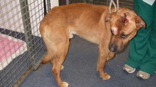 Cross-breed Rocky was shot six times and hit over the head with a shovel.