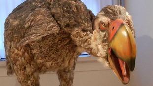 The prehistoric Gastornis, or 'terror bird'.