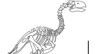 Undated handout photo issued by the European Association of Geochemistry of a sketch of the skeleton of Gastornis.