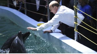 Russia's President Vladimir Putin leans to touch dolphins as he visits the Primorsky Aquarium