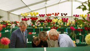 Judges take a closer inspection of the flowers
