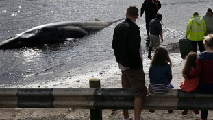 Locals watch the rare Sei whale on a small beach in Waterfoot that an expert said died from suffocation.