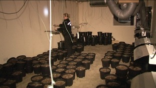Cannabis factory