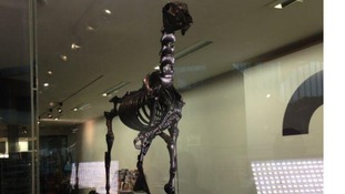 A skeleton with a London Stock Exchange ticker on its front leg