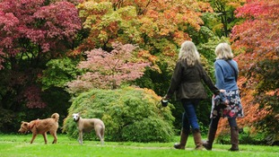 Dogwalkers admire the emerging Autumn colours at the Westonbirt National Arboretum near Tetbury, Gloucestershire.