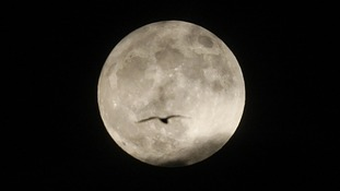 "A bird flies past the ""supermoon"" , seen from Edinburgh, as the satellite is expected to appear in its biggest and brightest form this year."