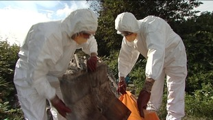Two men in protective clothing, disposing of asbestos sheeting