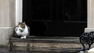 Larry the Downing Street cat 'disliked by the Cameron family'