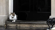 Downing Street moved to dismiss suggestions in Matthew d'Ancona's In It Together that the cat was unloved.