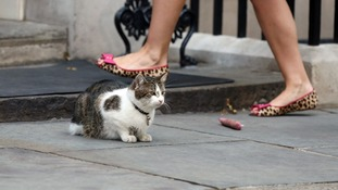 Larry the Downing Street cat sits by a toy outside 10 Downing Street.