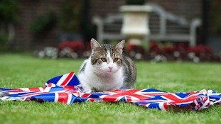Larry the Downing Street sits with British bunting to celebrate the Queen's Diamond Jubilee.