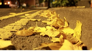 Autumn leaves in the road